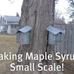 Making Maple Syrup-Small Scale!