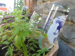 DIY Watering Globe from Wine Bottle