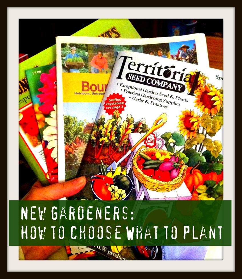 Reader 39 S Question My First Garden What Should I Plant Frugal Upstate
