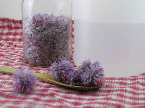 DIY: Chive Blossom Vinegar | Frugal Upstate