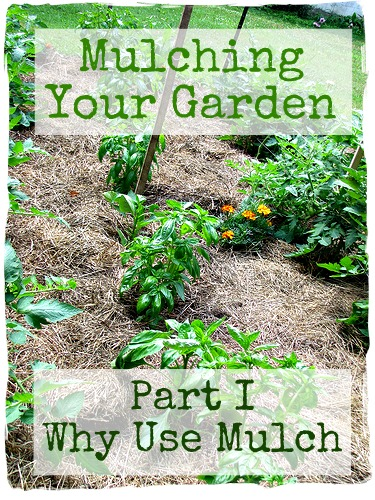 Mulching your garden part 1 why mulch your garden frugal upstate - Fight weeds with organic solutions practical tips in the garden ...