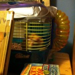 The Great Hamster Escape