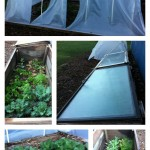 How's it Grow'in:  Planting the Early Spring Garden, Checking Coldframes and Starting Seeds.