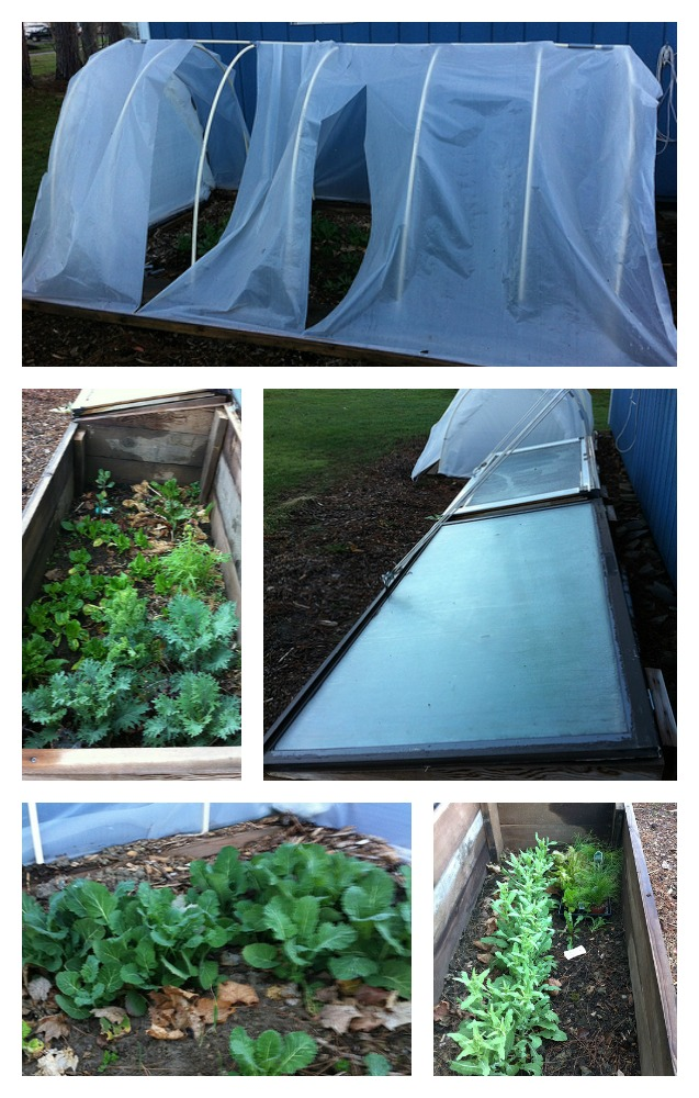 Coldframe Collage