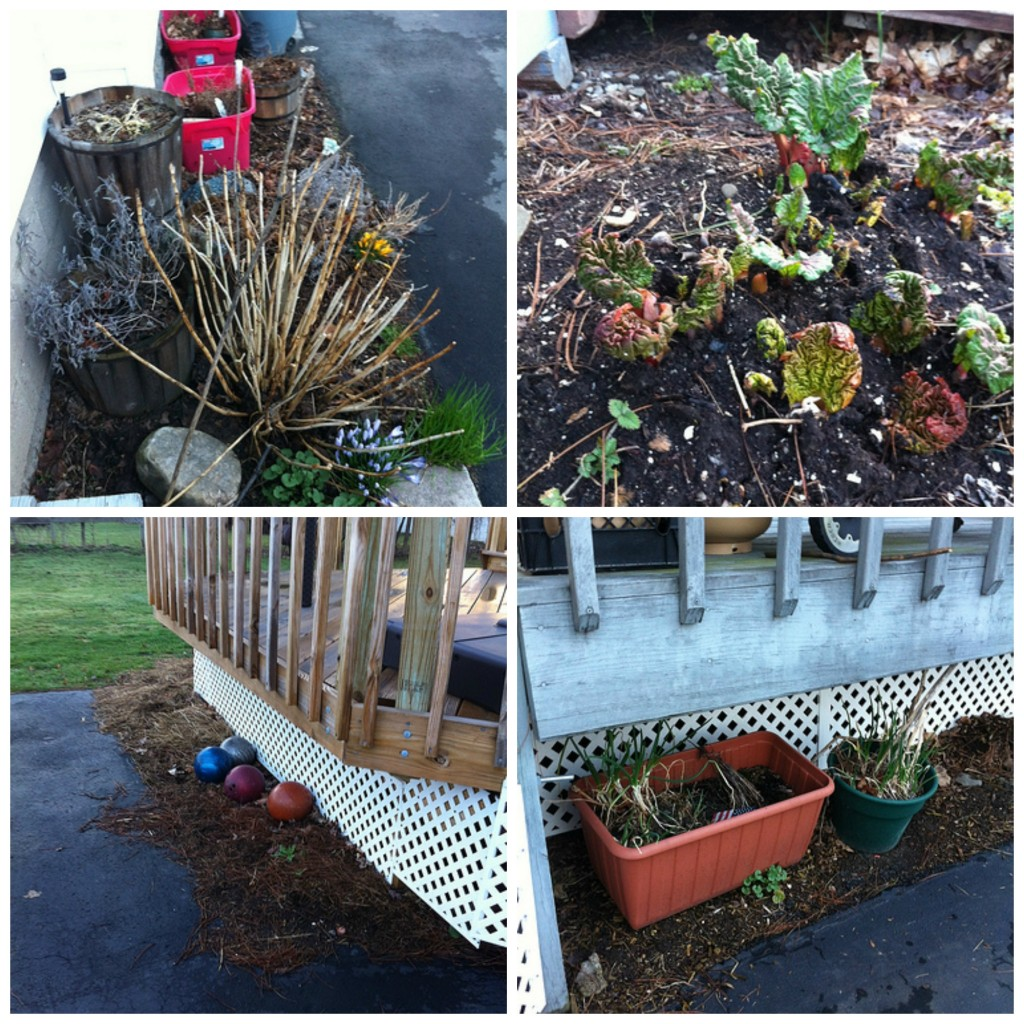 Early Spring Garden Collage 1