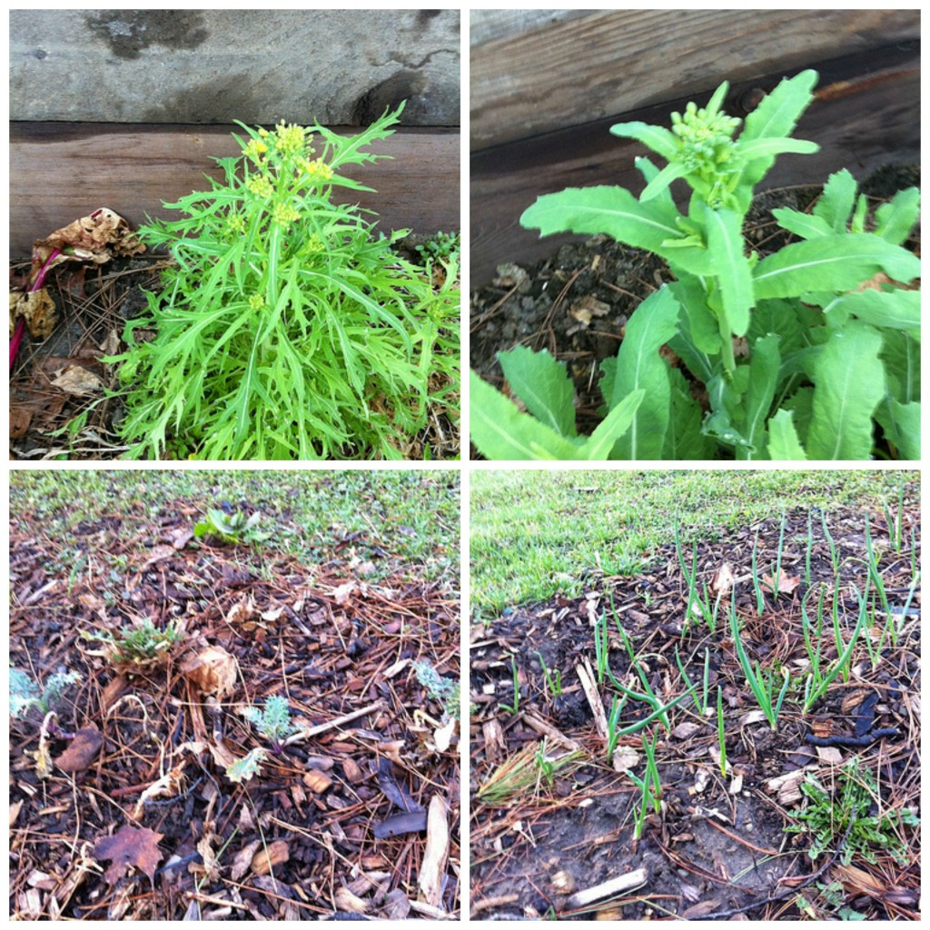 Overwintered Plants Collage