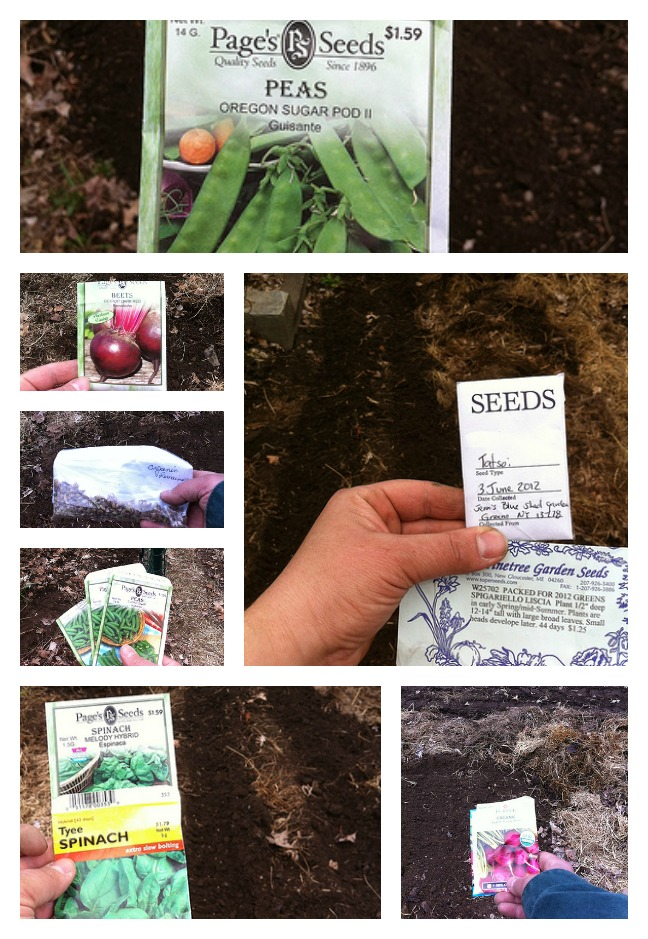 Spring Seed Planting Collage