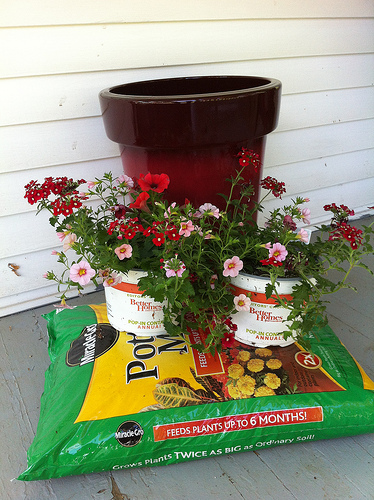 Filler Ideas for Large Planters - Frugal Upstate on pillow ideas, plaque ideas, outdoor ideas, very cool science project ideas, retaining wall ideas, vase ideas, gardening ideas, truck ideas, white ideas, garden ideas, plate ideas, animal ideas, teapot ideas, lantern ideas, leather ideas, coffee table ideas, plant ideas, stand ideas, pot ideas, bird feeder ideas,