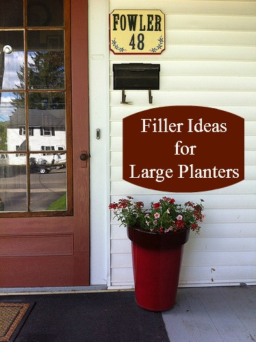 Filler Ideas for Large Planters