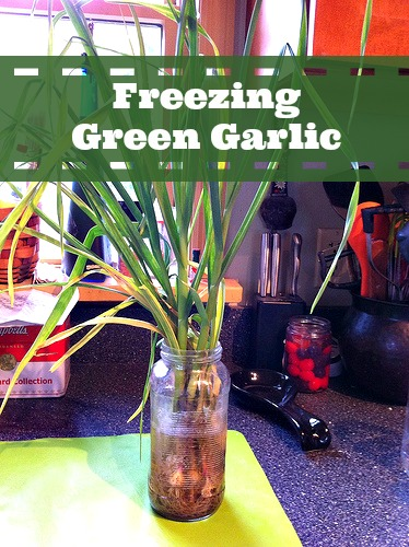 Freezing Green Garlic