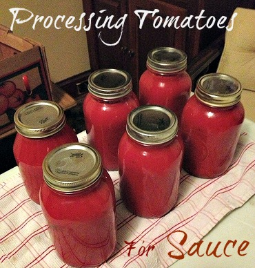 Processing Tomatoes for Sauce