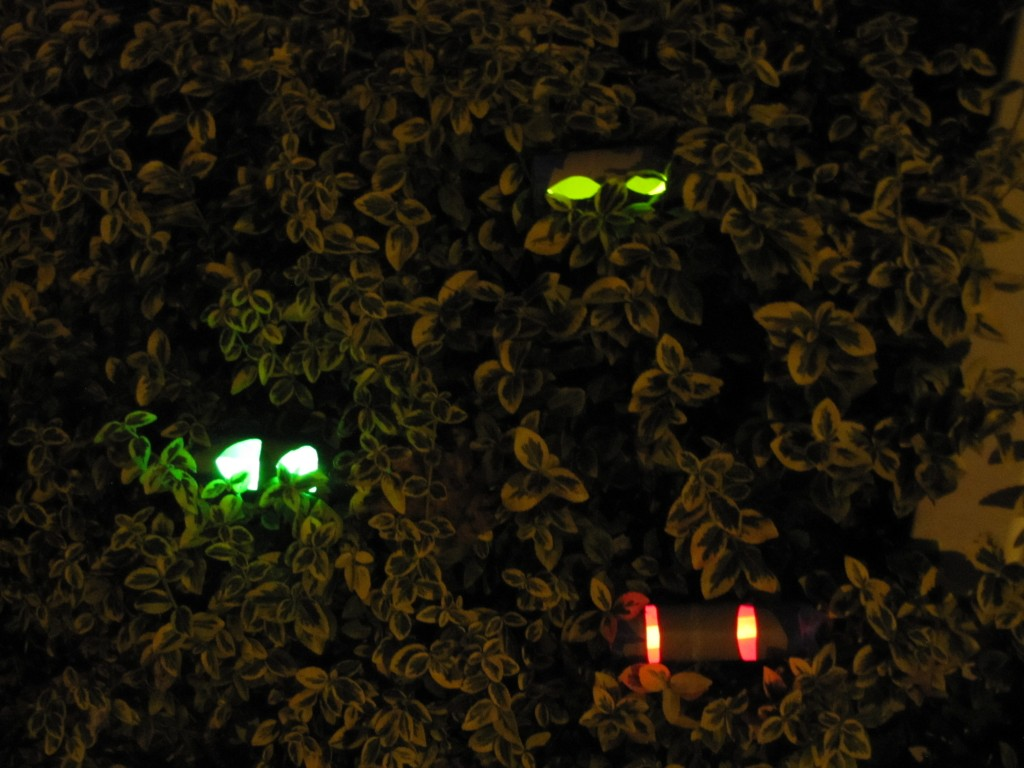 Spooky Halloween Eyes in the Bushes
