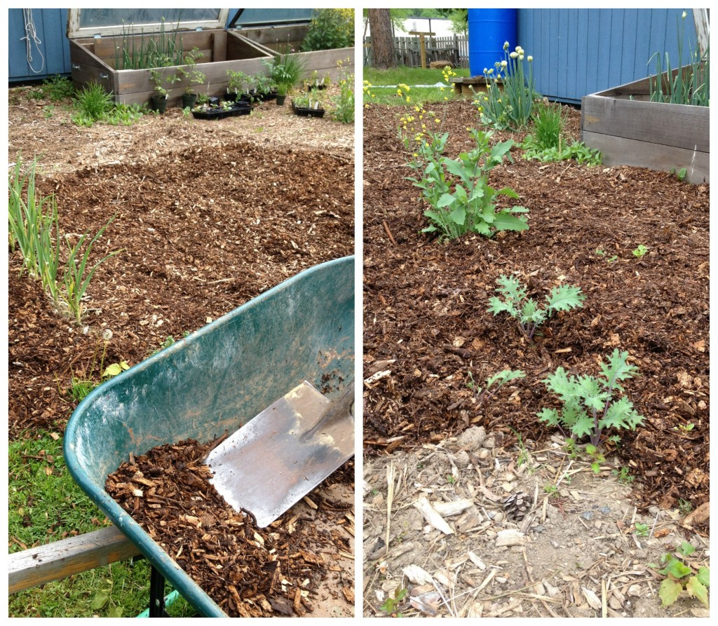 Wood Chip Mulch in the Garden