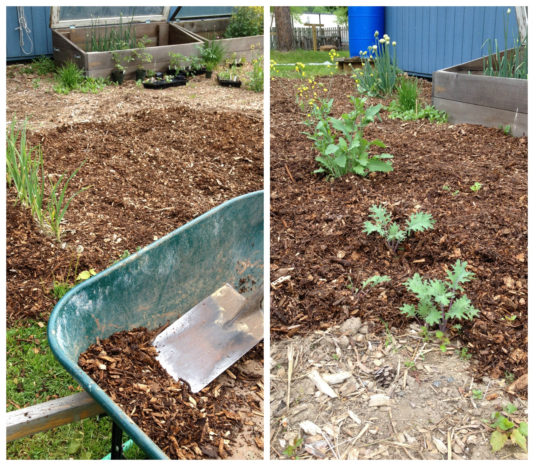 Mulching the spring vegetable garden frugal upstate