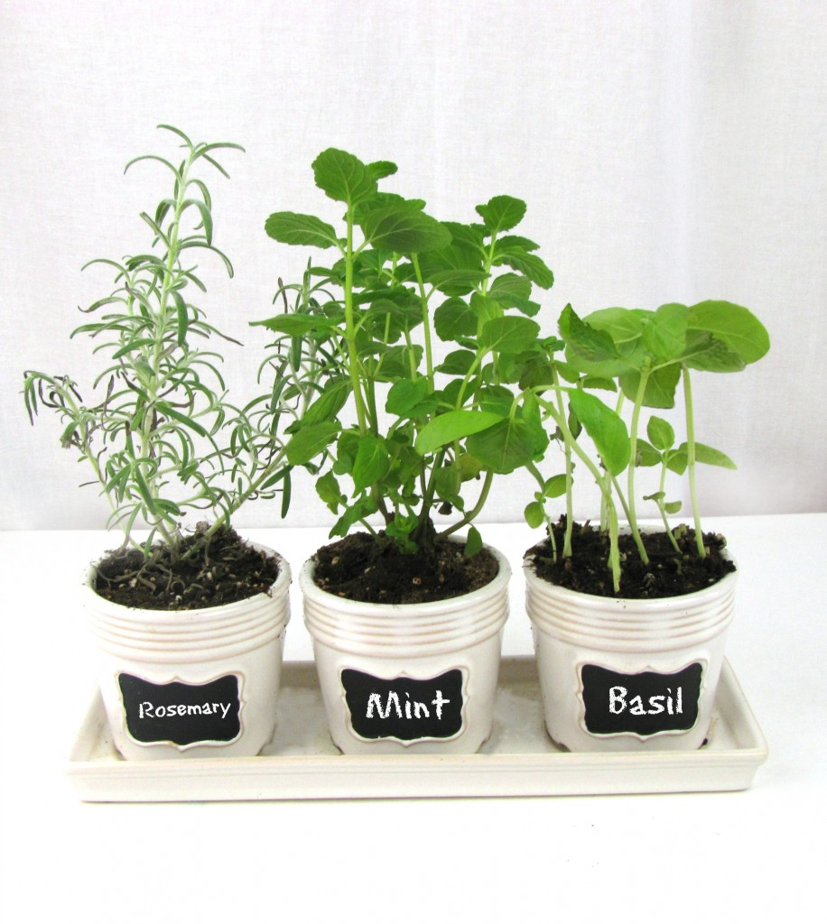 Kitchen windowsill herb garden frugal upstate Kitchen windowsill herb pots