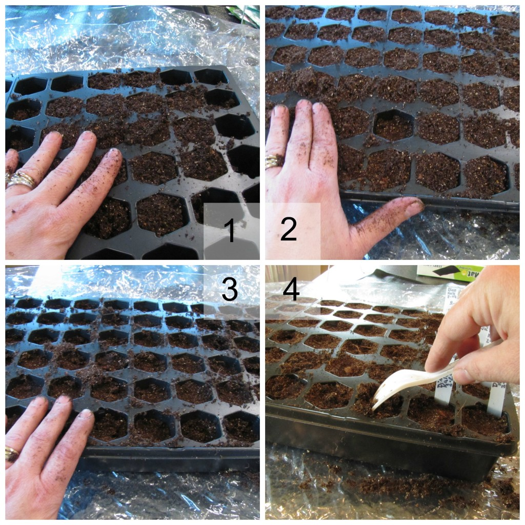 Starting seeds -- filling the trays