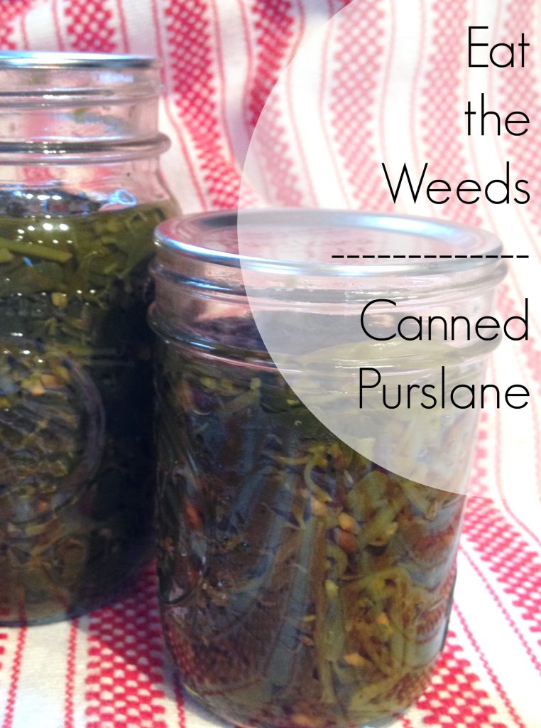eat-the-weeds-canned-purslane